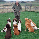 'Now Pay Attention', Mordor Gun Dogs, International Training & Breeding, Perthshire,         Scotland