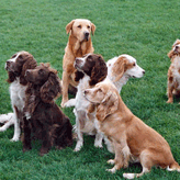 A Motley Crew, Mordor Gun Dogs, International Training & Breeding, Perthshire,         Scotland