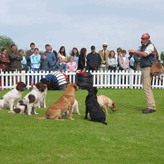 The Motley Crew Looking Smart at the Highland Show 2005, Mordor Gun Dogs,          International Training & Breeding, Perthshire,Scotland