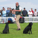This Way Zulu - I'm Over Here, Mordor Gun Dogs,          International Training & Breeding, Perthshire,Scotland