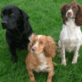 The Three Breeds at Mordor Gundogs, International Training & Breeding, Perthshire,          Scotland