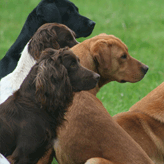 The Crew at the BASC Fair, Mordor Gundogs, International Training & Breeding,          Perthshire, Scotland