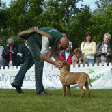 Demonstrations, Mordor Gundogs, International Training & Breeding,          Perthshire, Scotland
