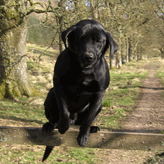 Training, Mordor Gundogs, International Training & Breeding,          Perthshire, Scotland