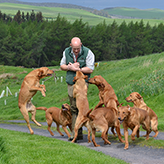 Charlie Thorburn and His Fox Red Labradors, Mordor Gundogs, International Training & Breeding, Perthshire, Scotland